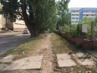 Vairākums aptaujas dalībnieku atbalsta koku ciršanu Rojas ielas posmā