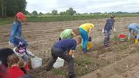 Rīgas bērni ierauga, kur burkāns aug