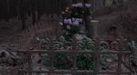 Nav skaidrības, vai dzīvnieku kapsētas pakalpojumi būs bezmaksas