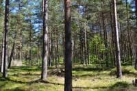 Latvijā atrasts mazāk Eiropas nozīmes biotopu nekā plānots