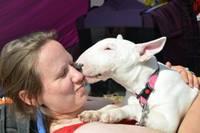 Populāri un reti mīluļi šķirnes suņu izstādē