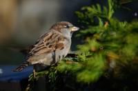 Aicina stundas garumā pētīt un skaitīt putnus