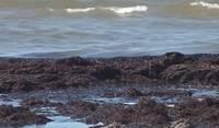 Latvijā uzsākta aļģu rūpnieciskās izmantošanas iespēju pētniecība