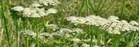 Liepājas ezera malā latvāņus apkaros piecus gadus
