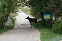 Savvaļas dzīvnieku transportēšanai ārpus Liepājas atkārtoti meklē pakalpojuma sniedzēju