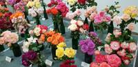 Liepājas latviešu biedrības namā rozes vāzēs, tērpos un gleznās