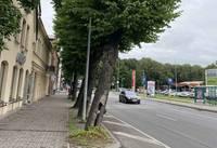 Aicinājums apspriest koku ciršanu Brīvības ielā pie īpašuma Nr. 9