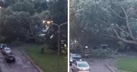 Vēja lauzts koks uzkrīt automašīnām