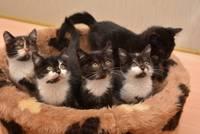 Trīs kaķēni jau rezervēti