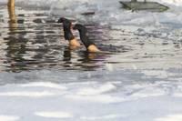 """Arī Durbes """"roņi"""" turpina peldes ziemā"""