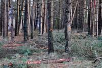 Koku ciršana Papes dabas parka teritorijā – pretrunā ar noteikumiem