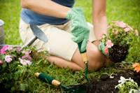 4 padomi, kas ļaus uzlabot dārza augsnes kvalitāti