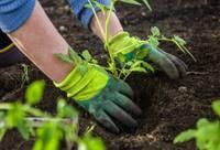 Kā sagatavot piemājas dārzu pavasara/vasaras sezonai?