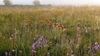 Ar lepnumu par savu pļavu. Lai zālājs pastāvētu ilgstoši, bez cilvēka neiztikt
