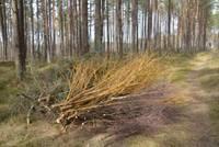 Nozāģētie zari nonāk uz ceļa Bernātu dabas parkā