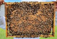 Viens bez otra nevar. Augiem nepieciešama apputeksnēšana, bet medus bitēm vieta, kur ievākt ziedu nektāru
