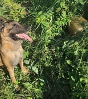 Kinologs ar suni Marko atrod degvielas zagli Dubeņos