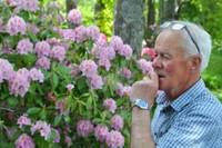 Rododendri – dabas brīnums piejūras klimatā