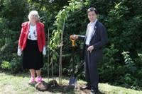 Japānas vēstnieks iestāda olimpisko koku Rucavā