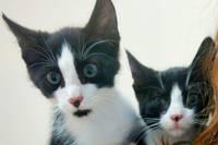 Divi kaķēni meklē mājas