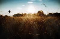 Reiņa poldera pļavas saglabās liellopi