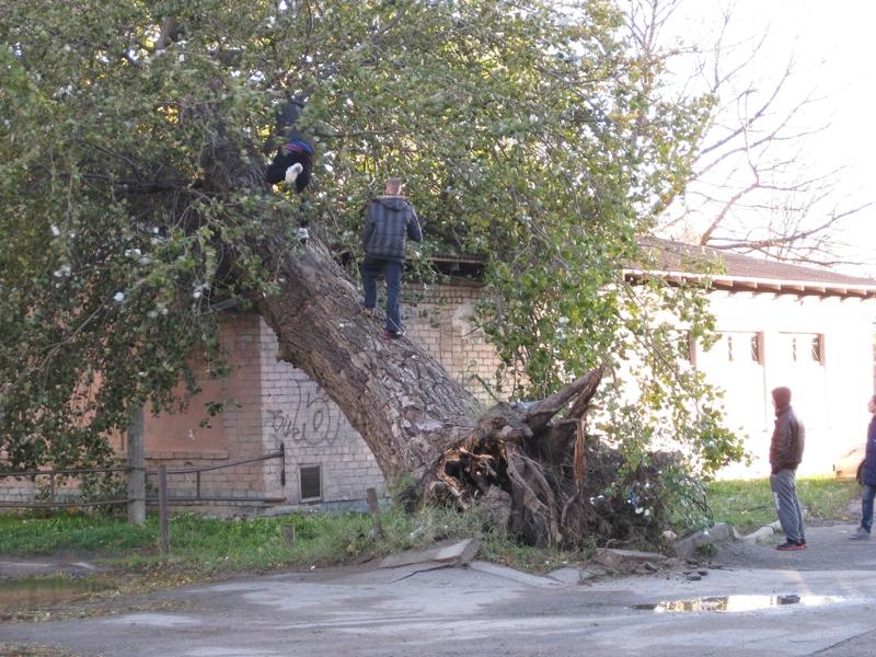 Фоторепортаж: Последствия бури в Лиепае