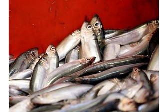 Латвия порежет на металлолом пять рыболовных судов