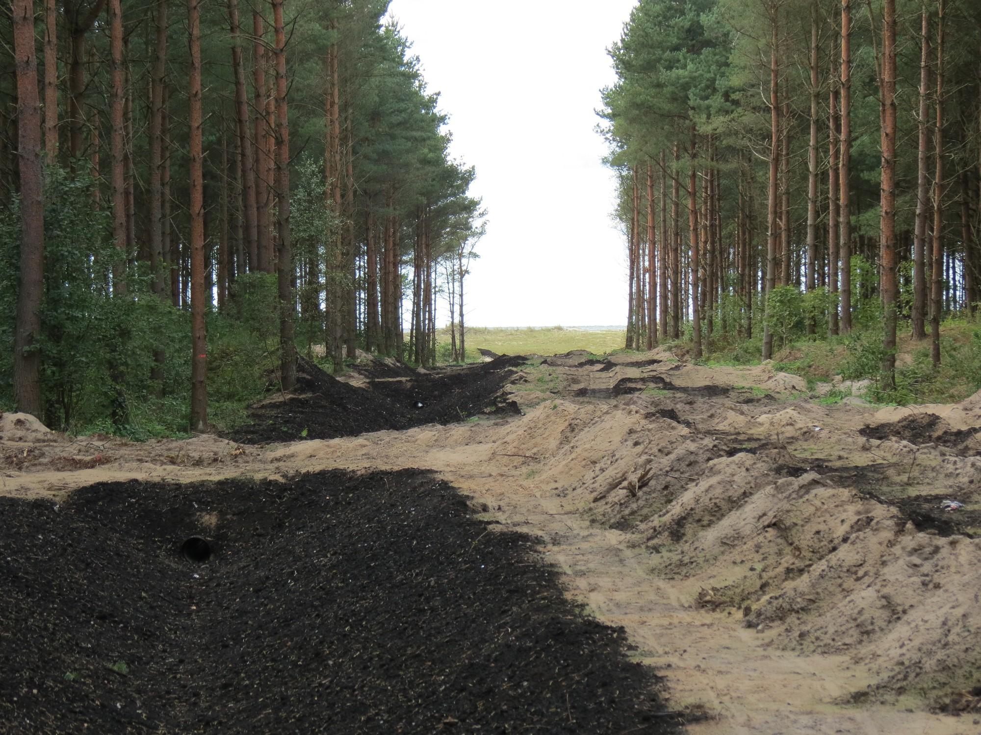 В дюнах вырублены деревья, будет дорога