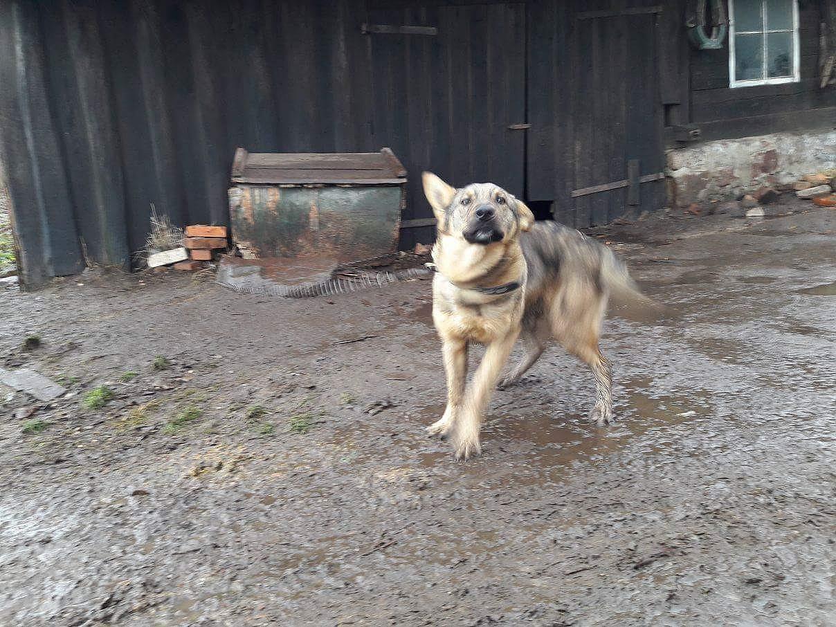 Обеспокоенные соседи жалуются – собака в Ницском крае содержится в ужасных условиях