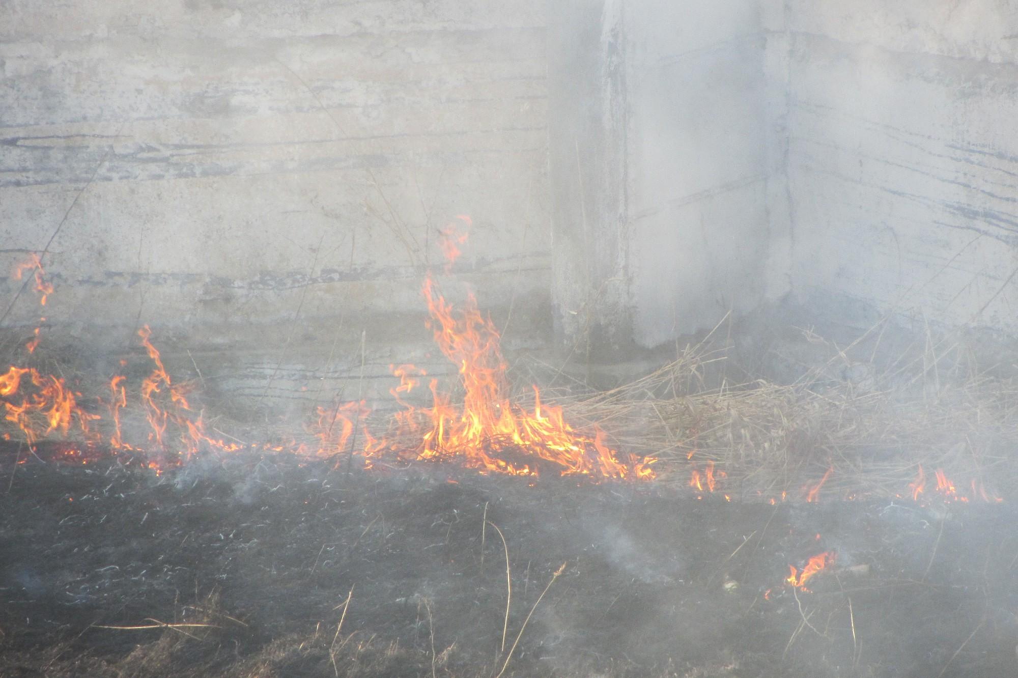 Вчера зарегистрировано восемь поджогов прошлогодней травы