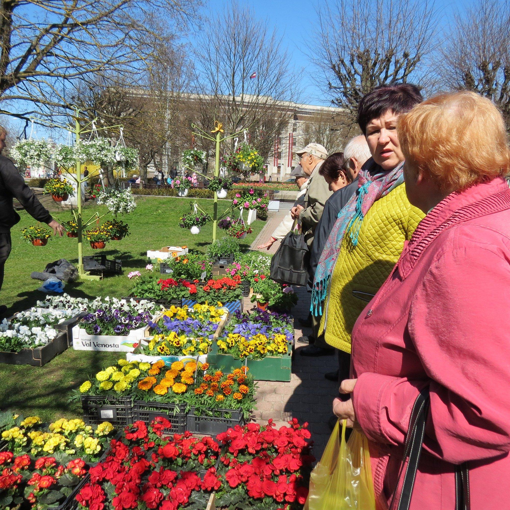В сады отправляются цветы и декоративные кустарники