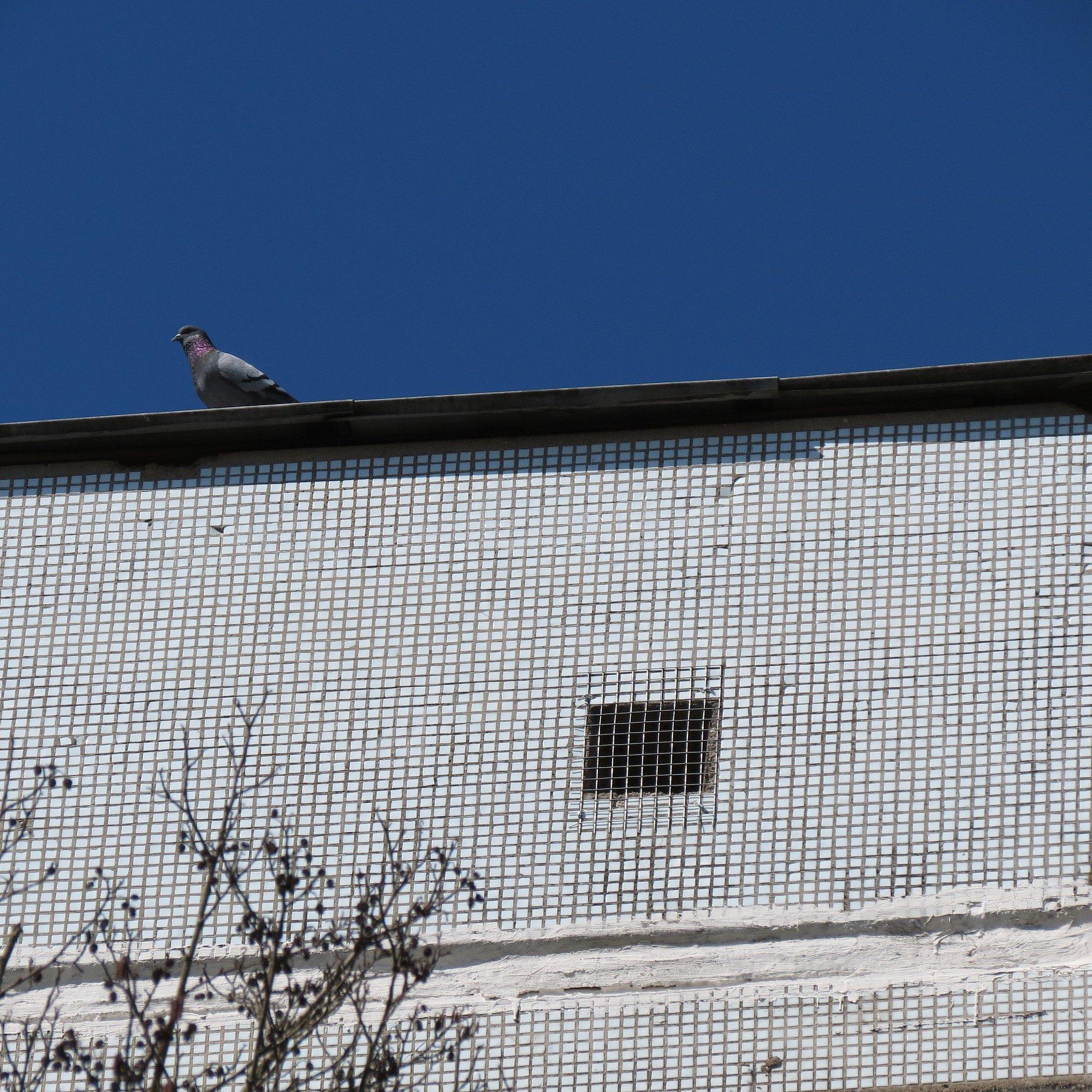 На ул. Баложа расстреливал голубей