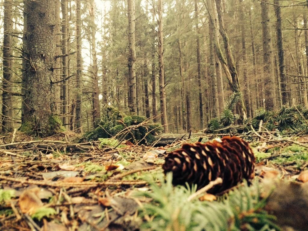 Нашелся пропавший без вести мужчина: он почти месяц жил в лесу