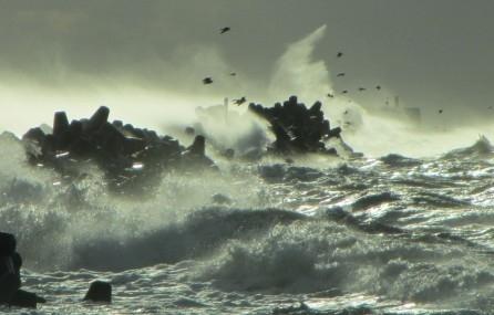 В Курземе ожидается усиление ветра