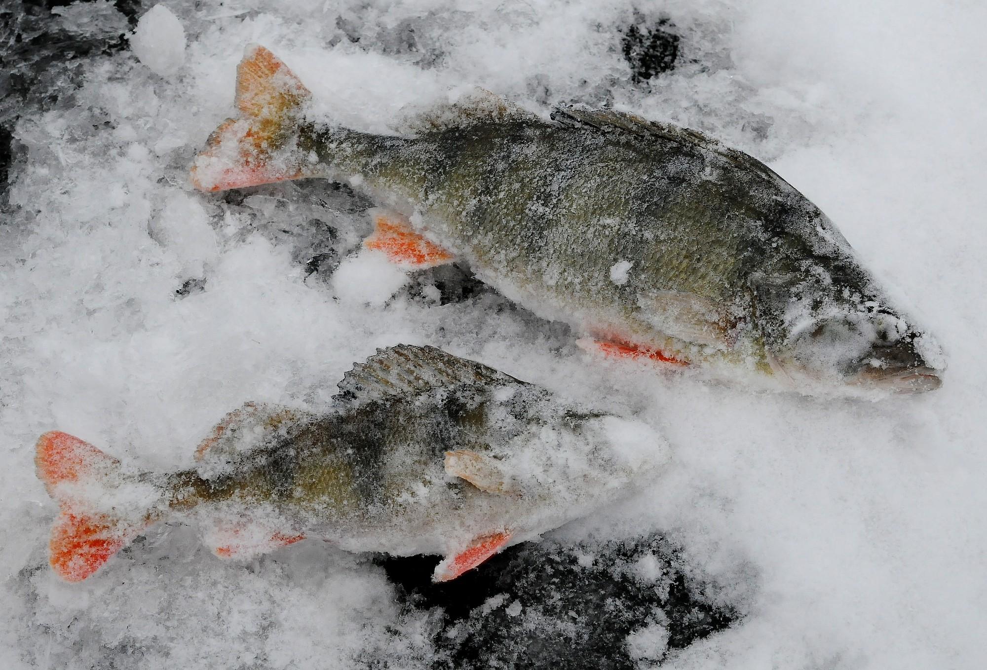 Сезон подледного лова открыт
