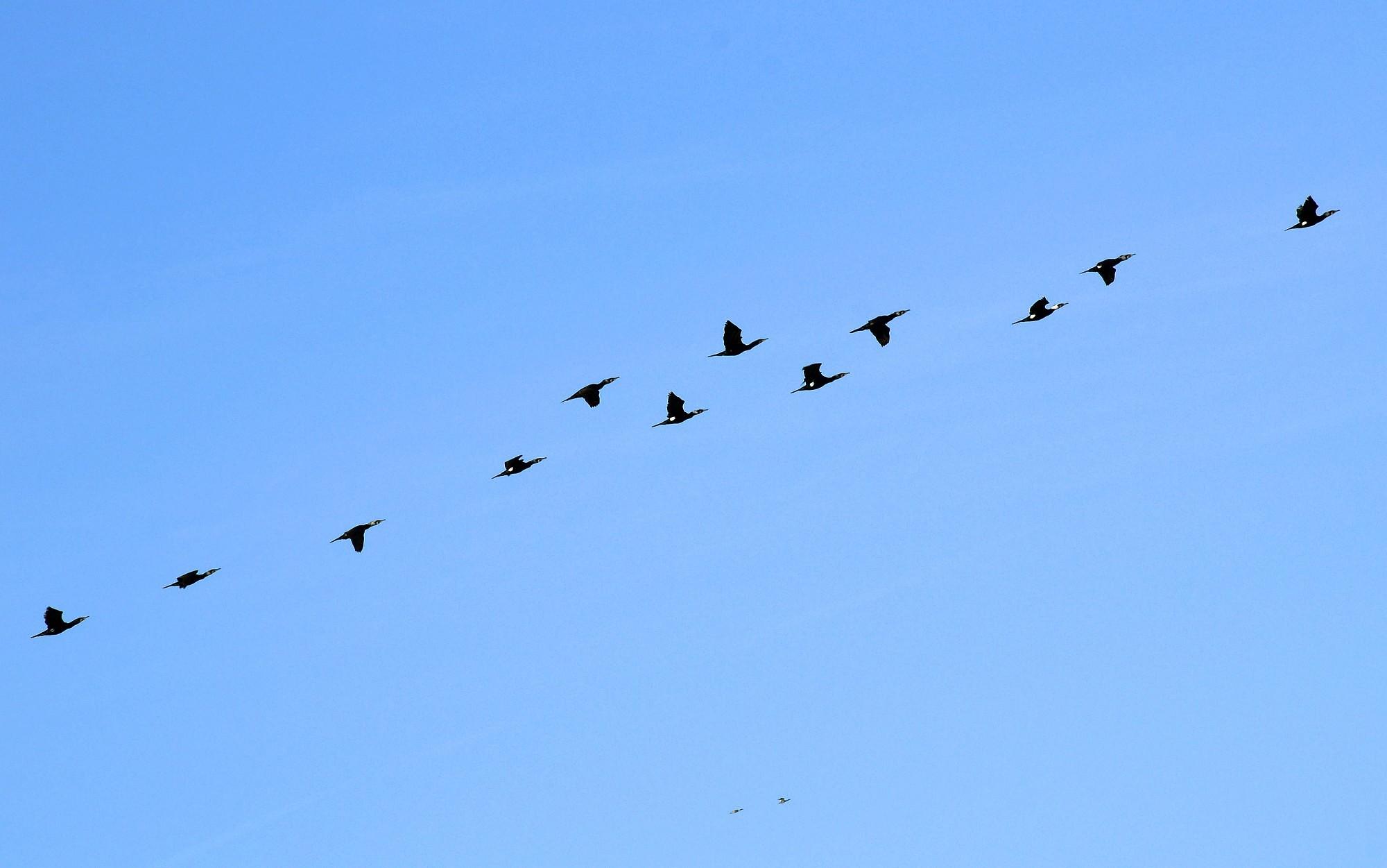 В Латвию начинают возвращаться первые перелетные птицы