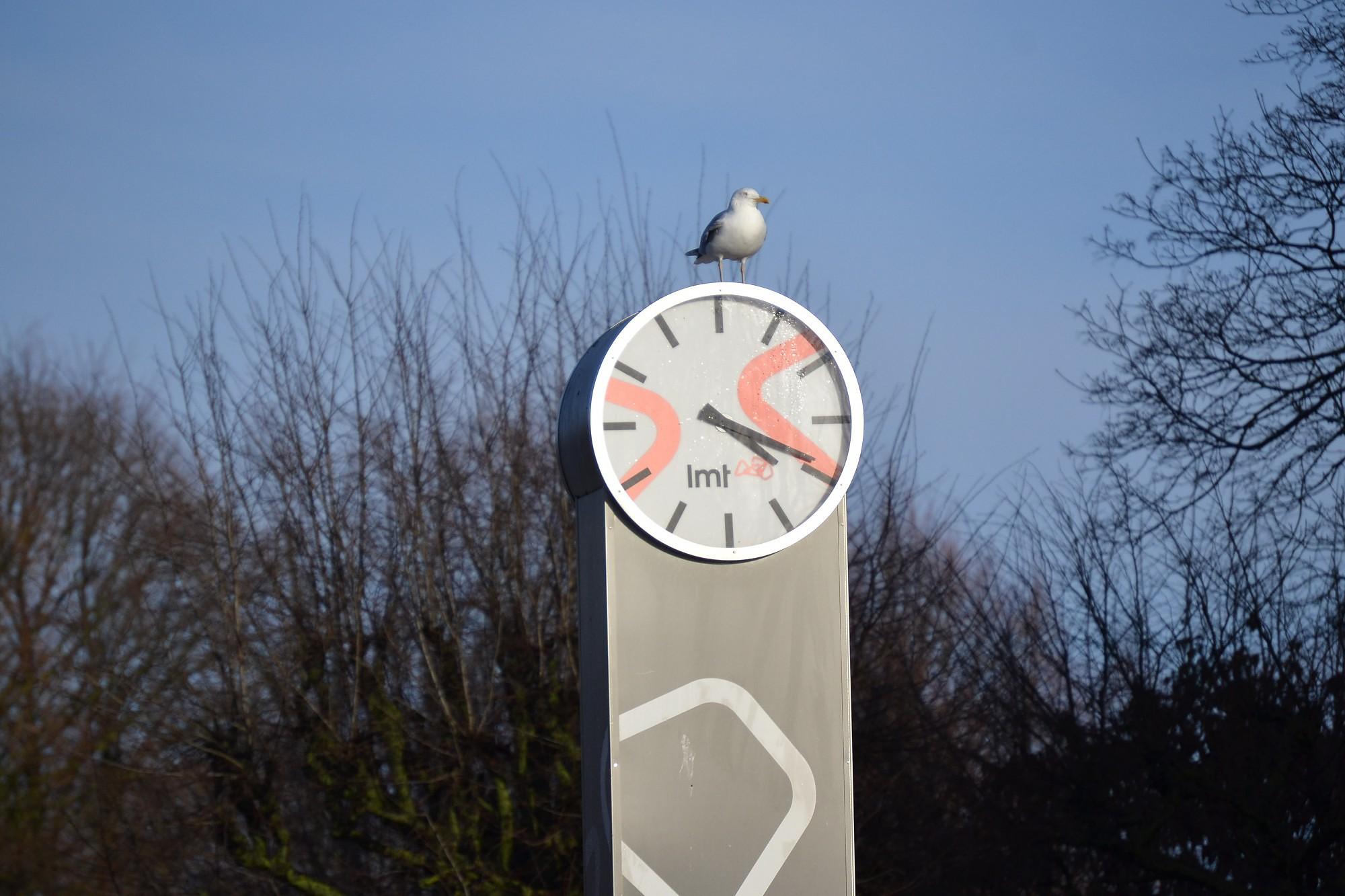 Жители положительно оценивают предложение отказа от перевода часов