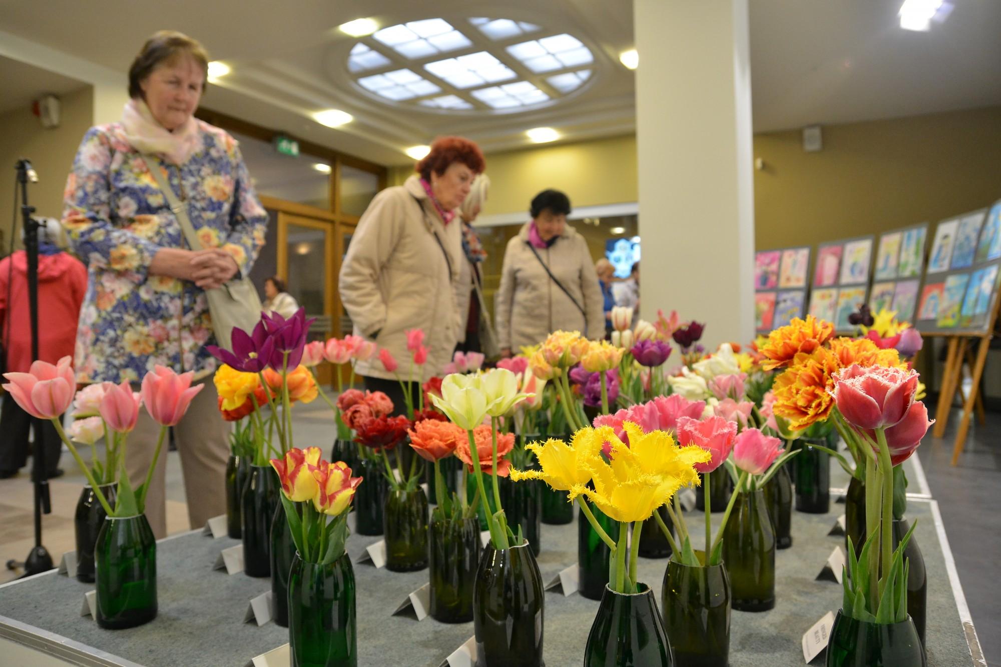 Открылась выставка тюльпанов и нарциссов