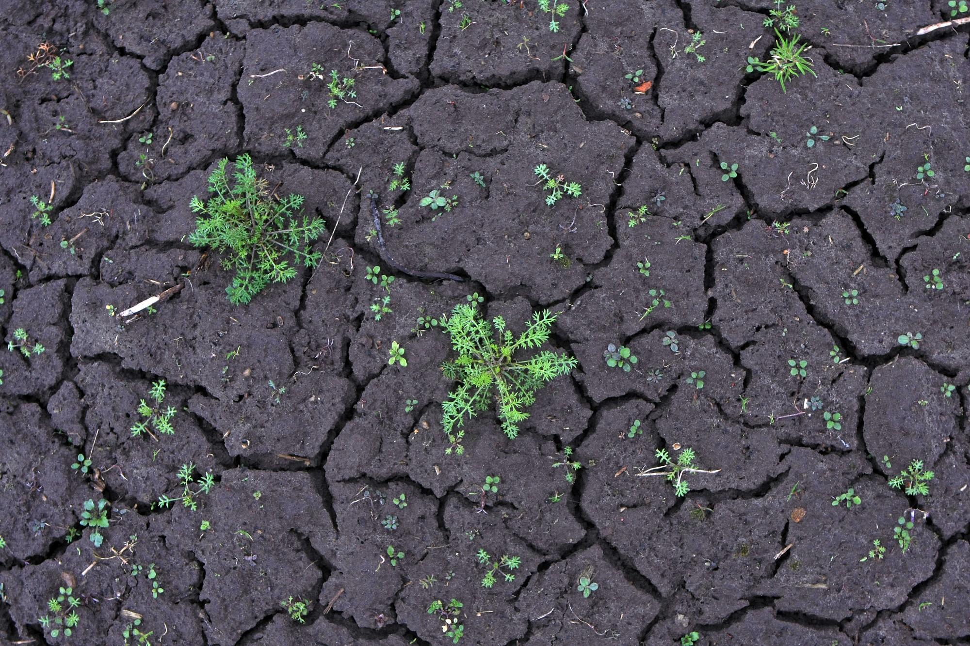 Руцава просит объявить чрезвычайную ситуацию из-за засухи