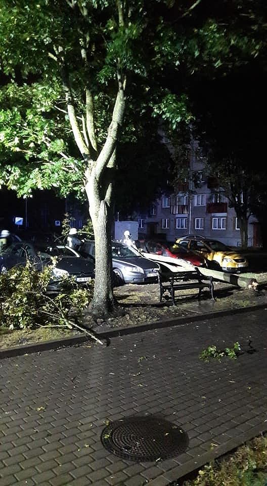 Ночью в Лиепайском порту порывы ветра достигали 24 м/с; дерево повредило две машины