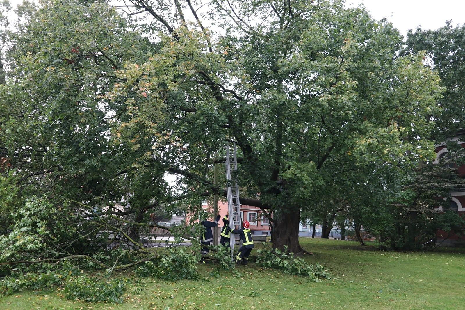 На крышу двухэтажного жилого дома упало дерево