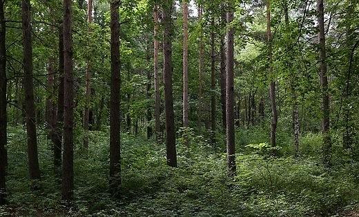 В Павилостском крае спасатели помогли человеку выбраться из леса