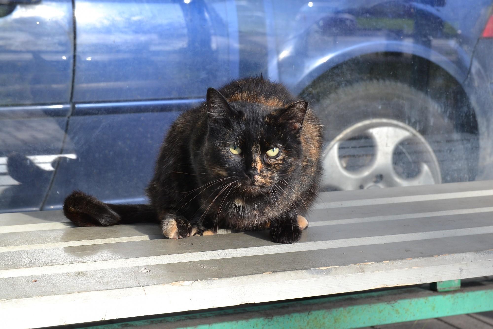 За этот год пожарные спасли более 600 животных, половина из них — коты