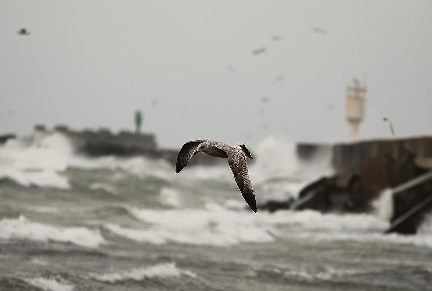 В пятницу будет дуть сильный ветер, наибольшее количество осадков ожидается в первой половине дня в Курземе