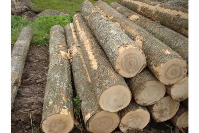 В Военном городке из леса незаконно вывозят бревна