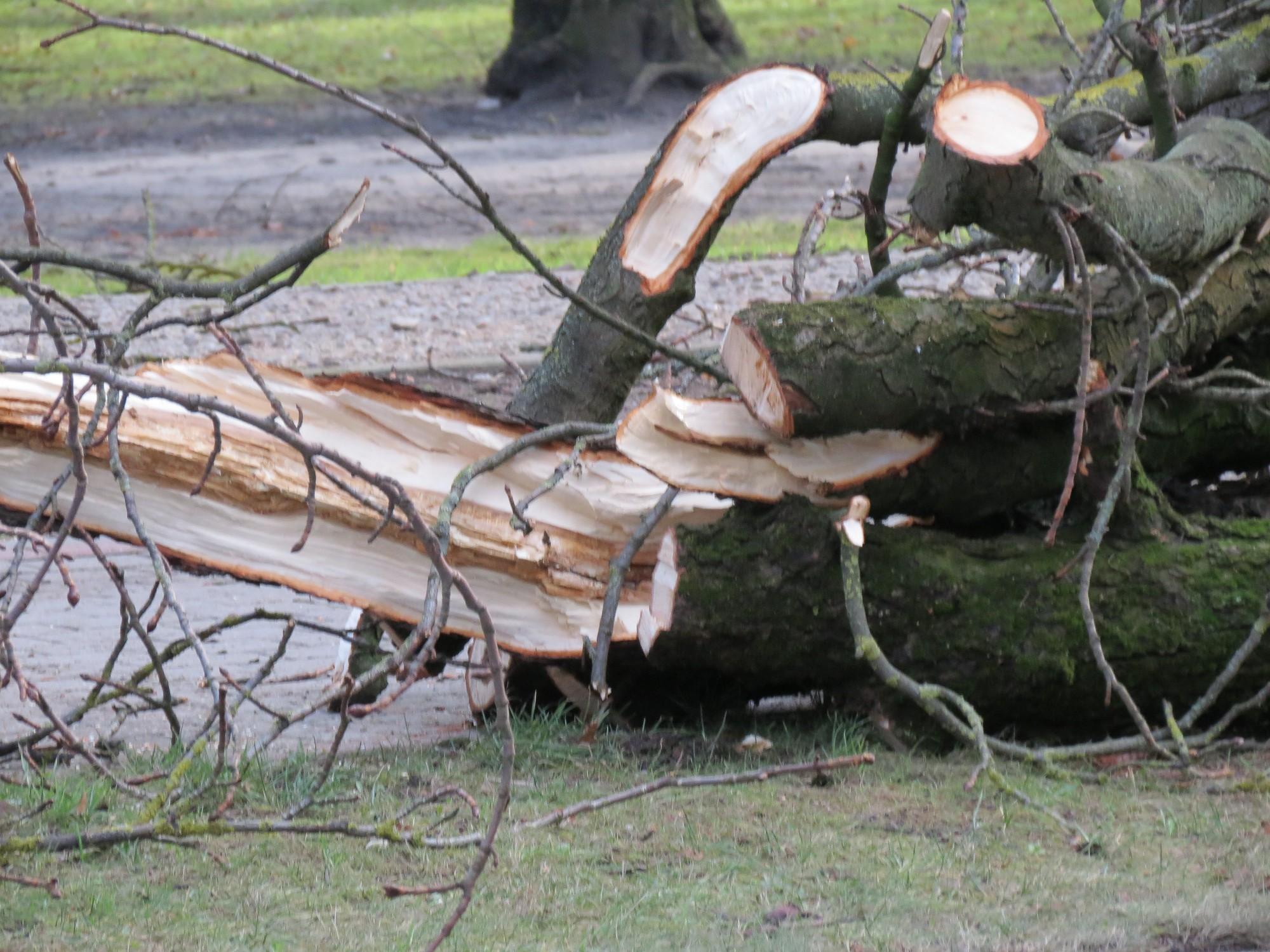 Ликвидируют последствия бури