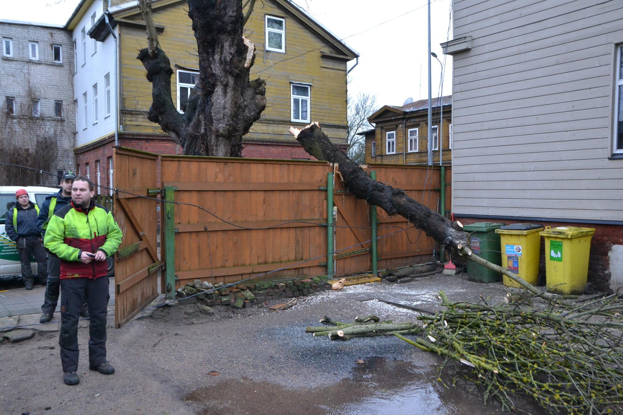 Упавшее дерево сломало калитку