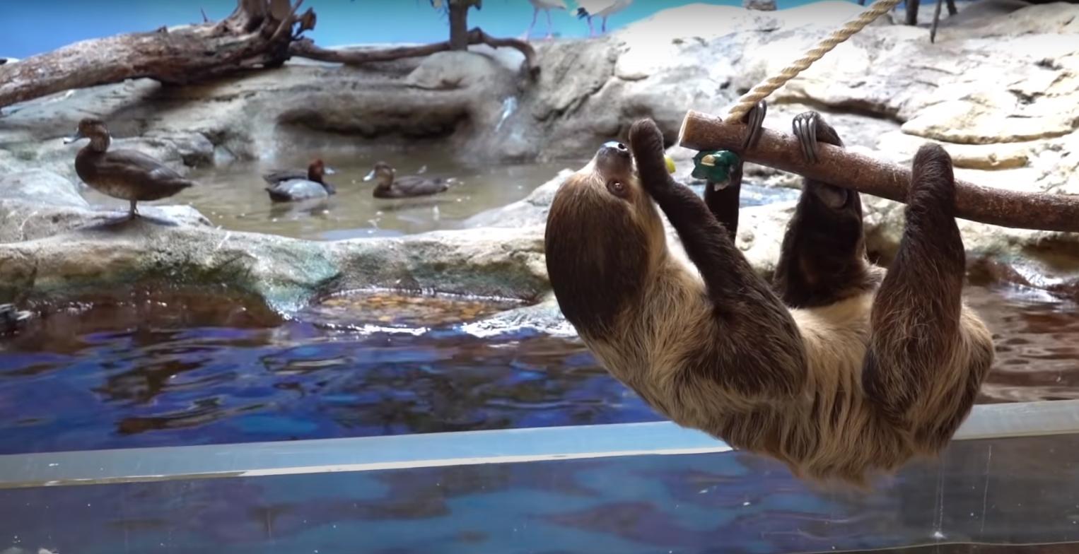 Хороший момент дня: Обитатели зоопарка идут в гости к соседям