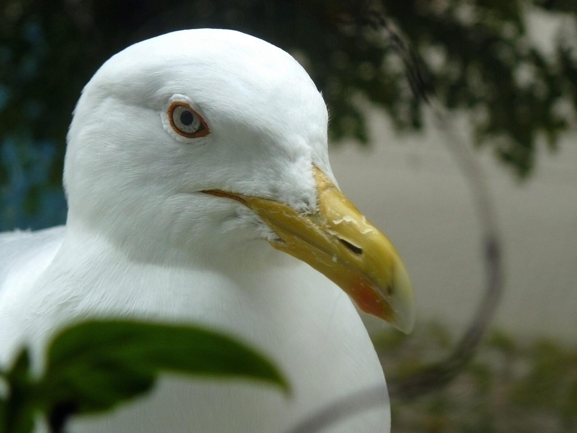 Спасли упавшую в водосточную трубу птицу