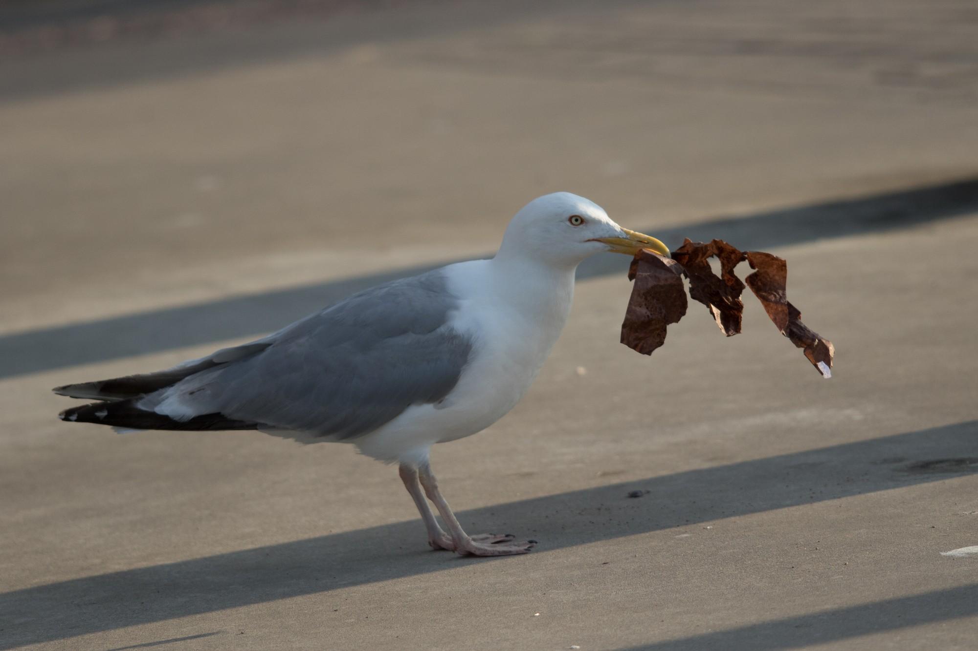 Из вентиляционной шахты высвободили птицу